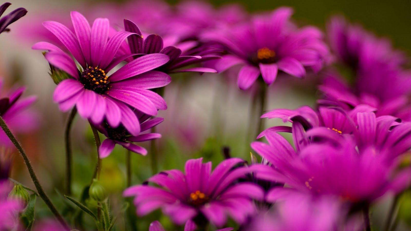 بالصور صور اجمل ورد , صور وقت تزهير الورد رائعة 3224 4