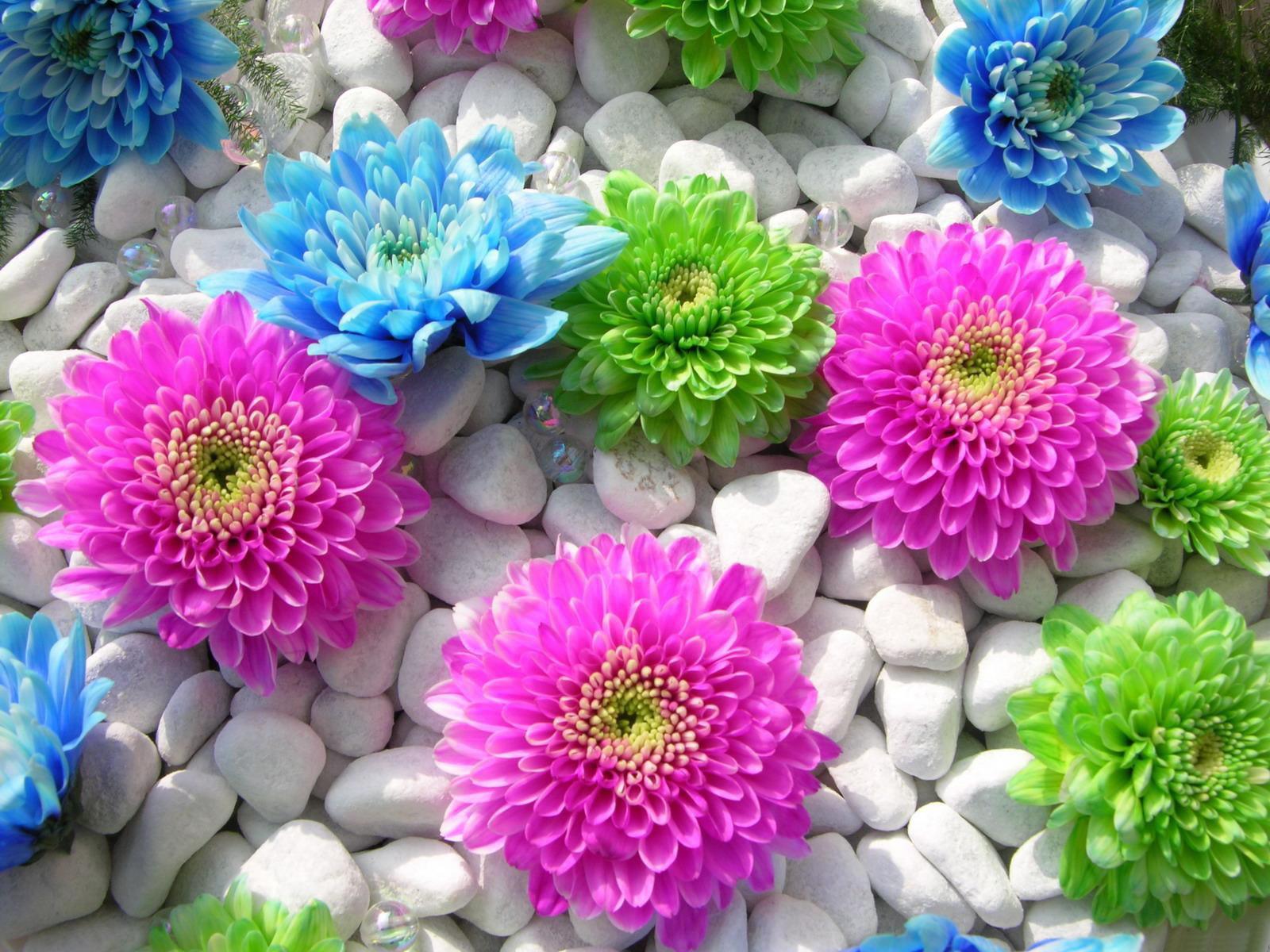 بالصور صور اجمل ورد , صور وقت تزهير الورد رائعة 3224 5