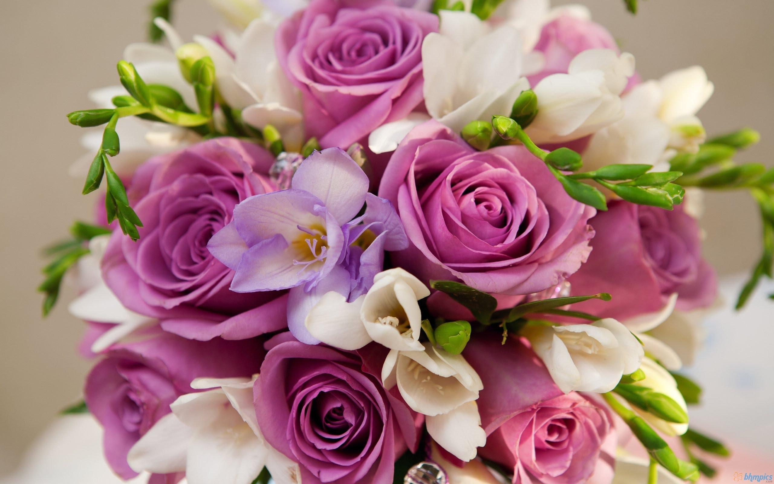 بالصور صور اجمل ورد , صور وقت تزهير الورد رائعة 3224 7