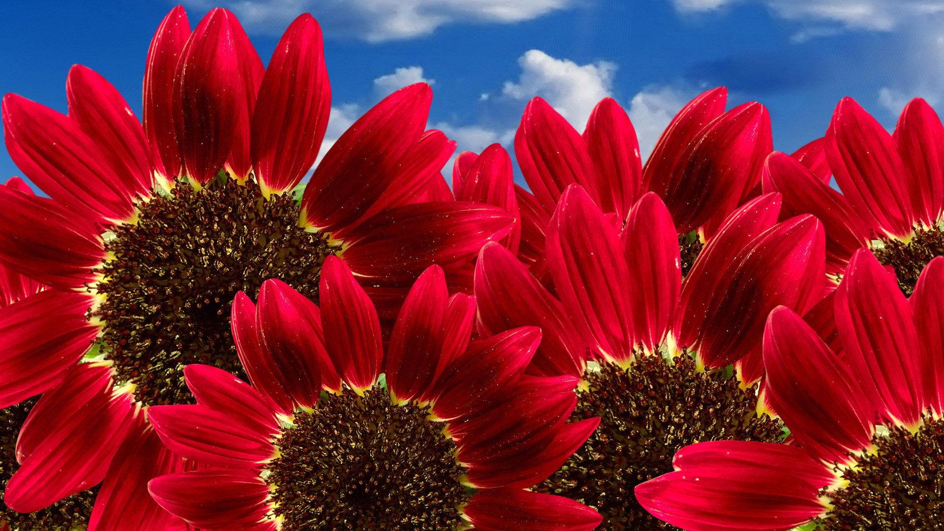 بالصور صور اجمل ورد , صور وقت تزهير الورد رائعة 3224 9