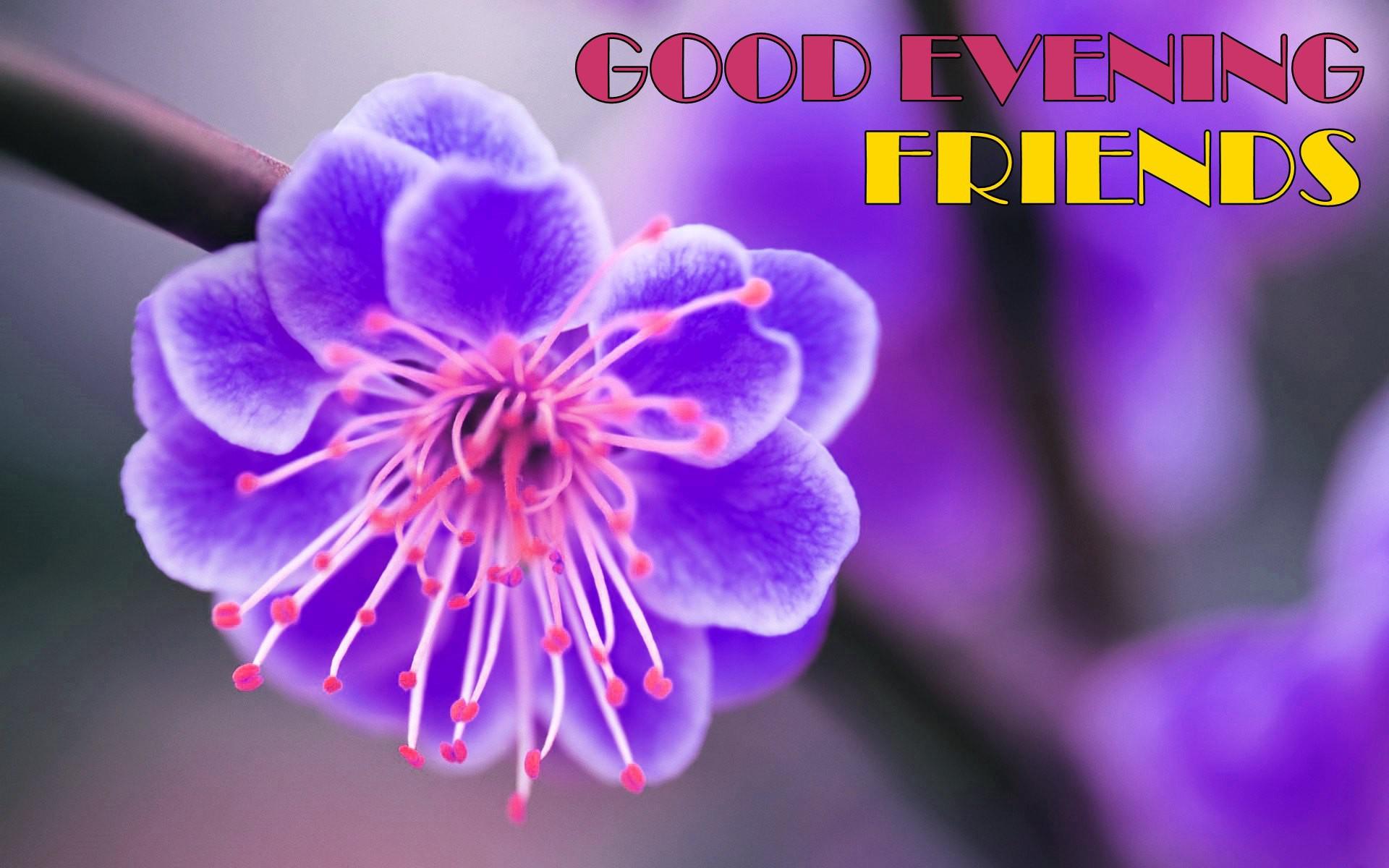 بالصور رسائل مساء الخير للاصدقاء , اجمل رسايل للاصدقاء 3273 2