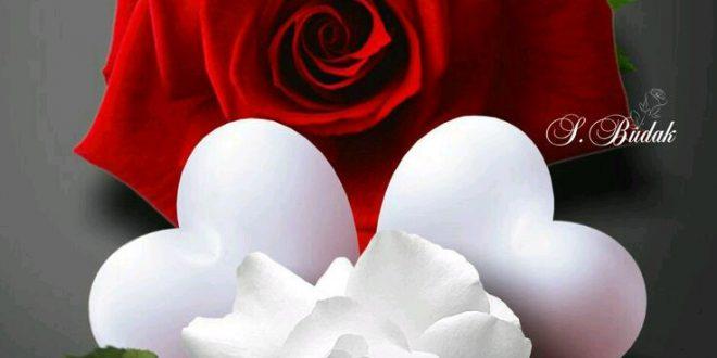 بالصور صور ورد حب , الورد وتعبيره عن المحبة والرومانسية بين العشاق 3284 12 660x330
