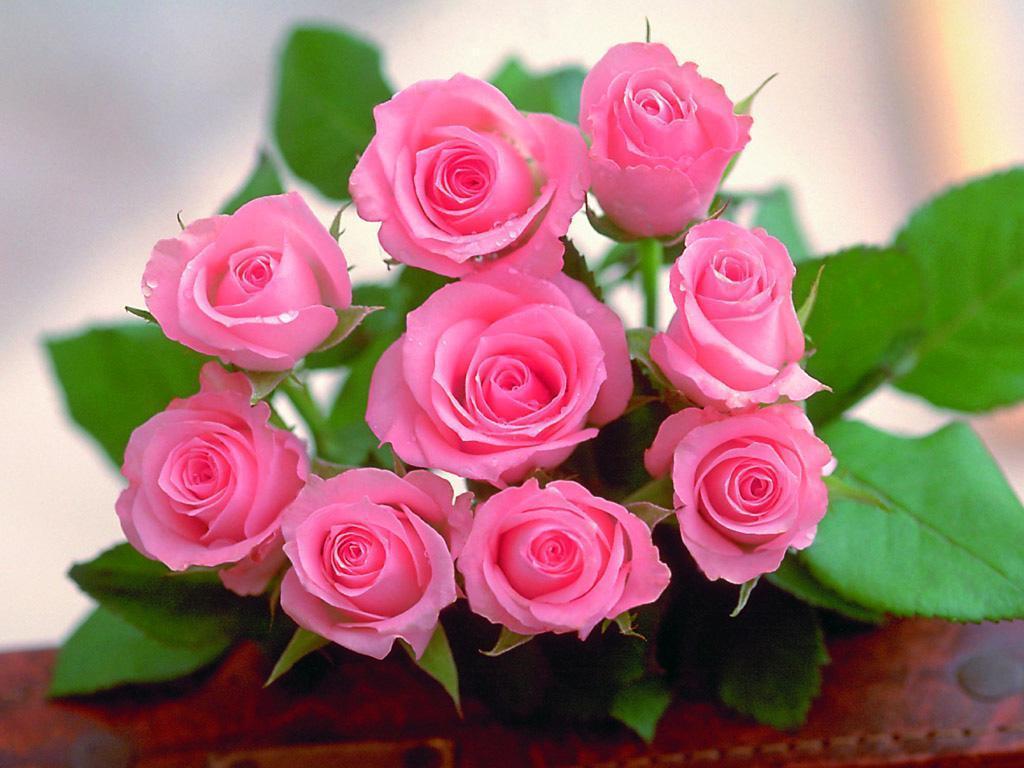بالصور صور ورد حب , الورد وتعبيره عن المحبة والرومانسية بين العشاق 3284 4