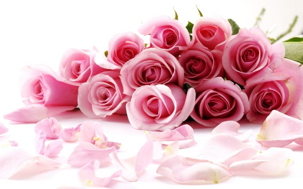 بالصور صور ورد حب , الورد وتعبيره عن المحبة والرومانسية بين العشاق 3284 5