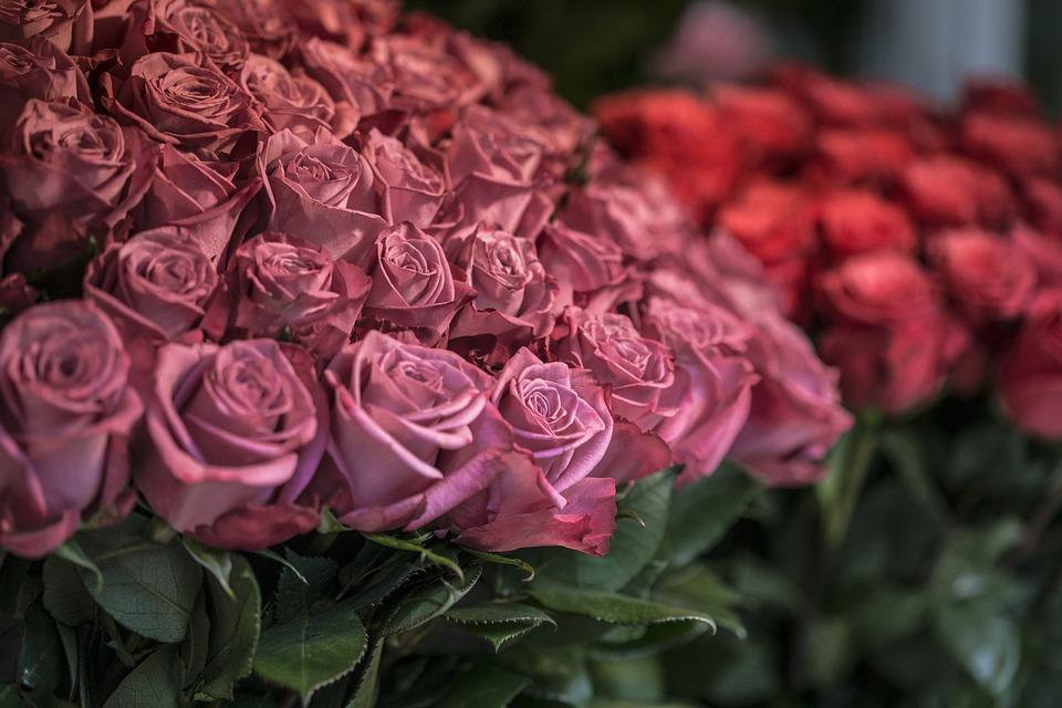 بالصور صور ورد حب , الورد وتعبيره عن المحبة والرومانسية بين العشاق 3284 9