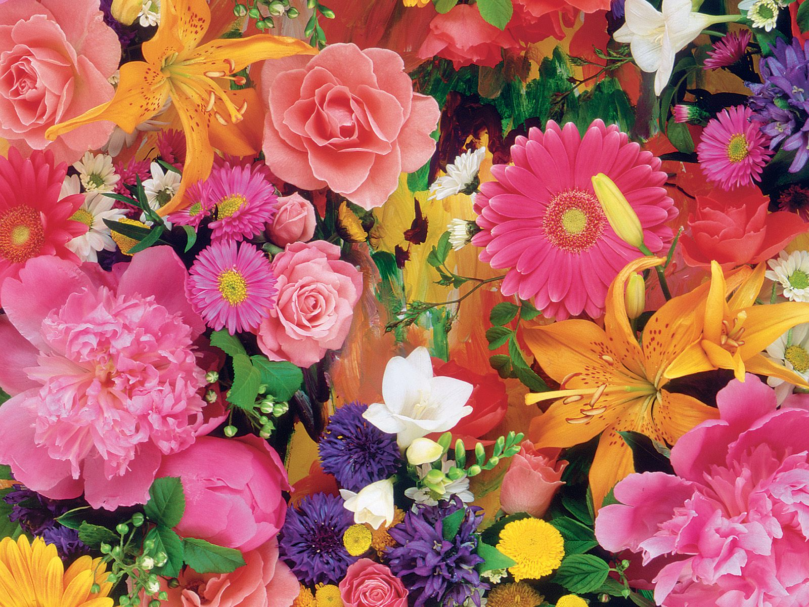 صور صور ورود روعه , التقاط سحر الورود الطبيعية فى صور خاصة رائعة