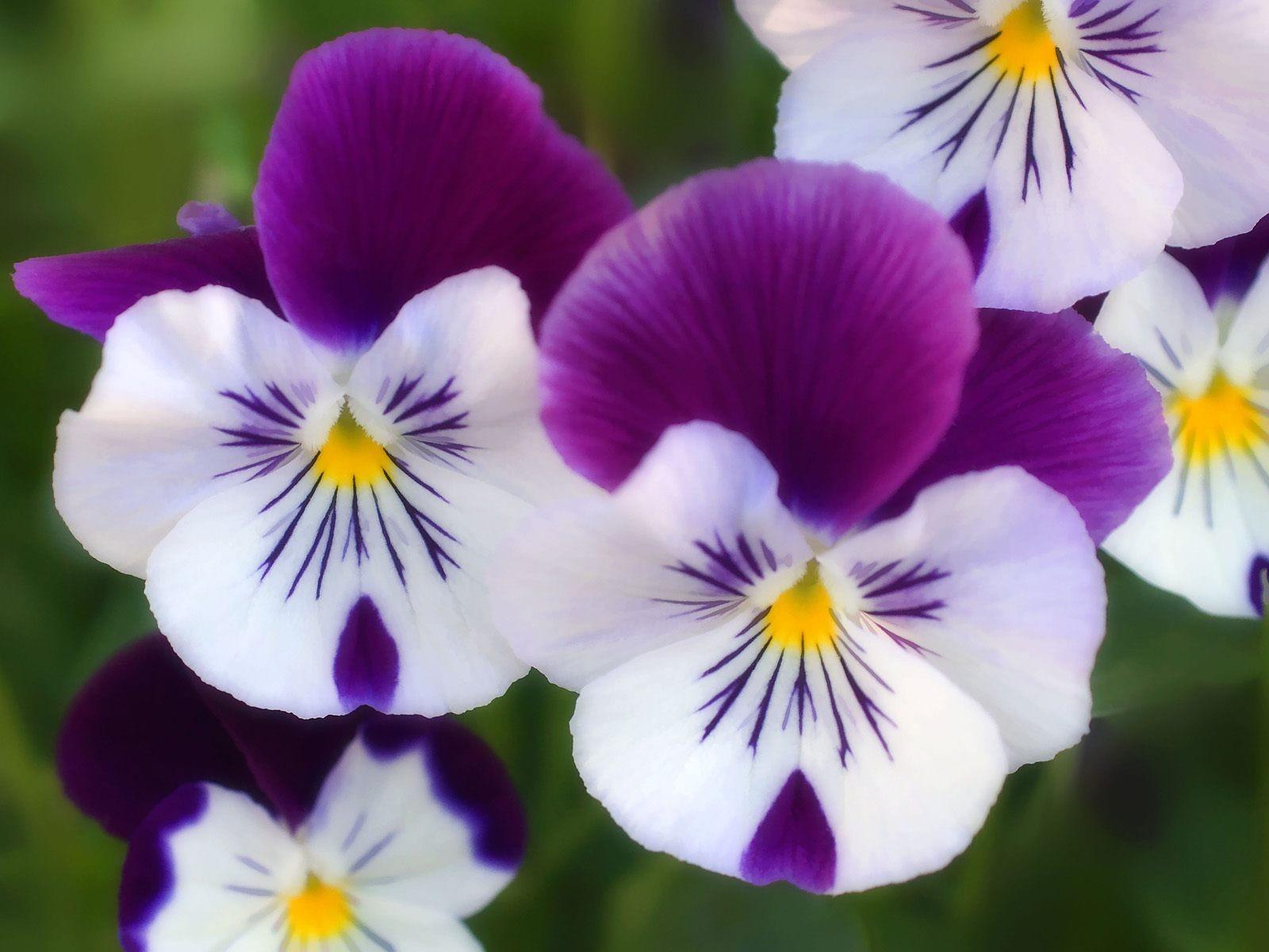 بالصور صور ورود روعه , التقاط سحر الورود الطبيعية فى صور خاصة رائعة 1905 10