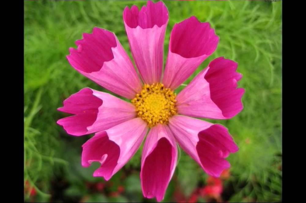 بالصور صور ورود روعه , التقاط سحر الورود الطبيعية فى صور خاصة رائعة 1905 11