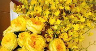 بالصور صور ورود روعه , التقاط سحر الورود الطبيعية فى صور خاصة رائعة 1905 12 310x165