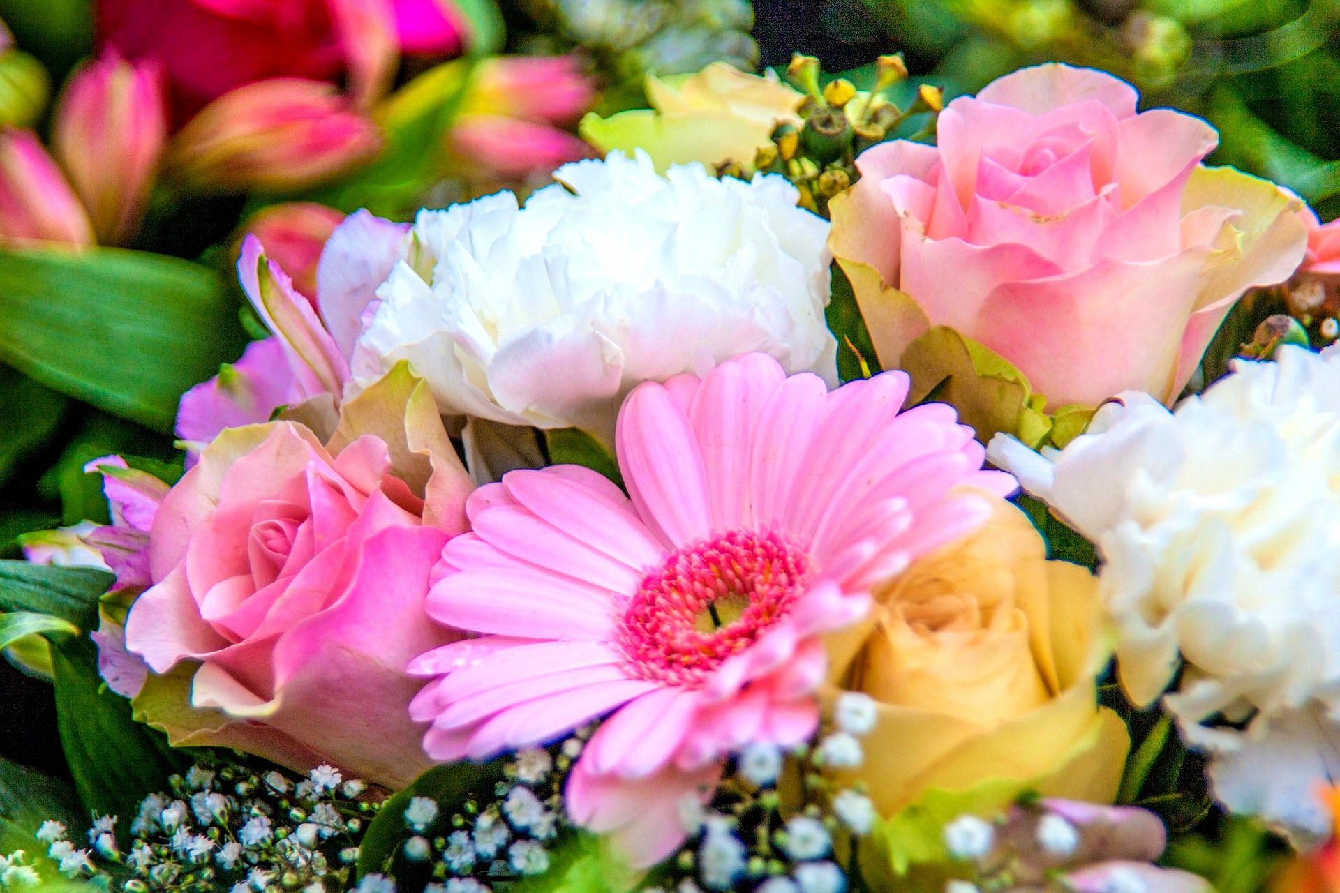 بالصور صور ورود روعه , التقاط سحر الورود الطبيعية فى صور خاصة رائعة 1905 5