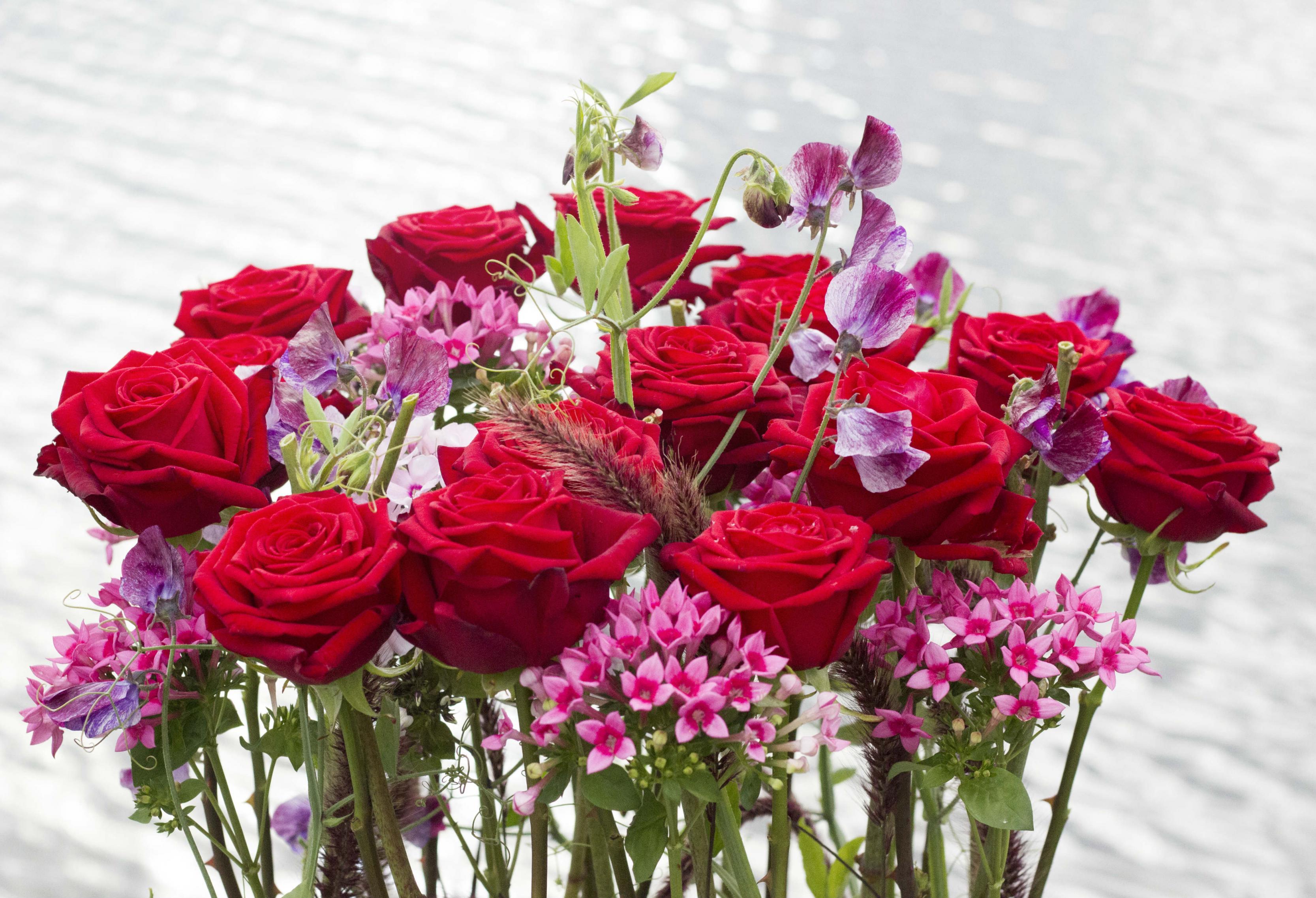 بالصور صور ورود روعه , التقاط سحر الورود الطبيعية فى صور خاصة رائعة 1905 9