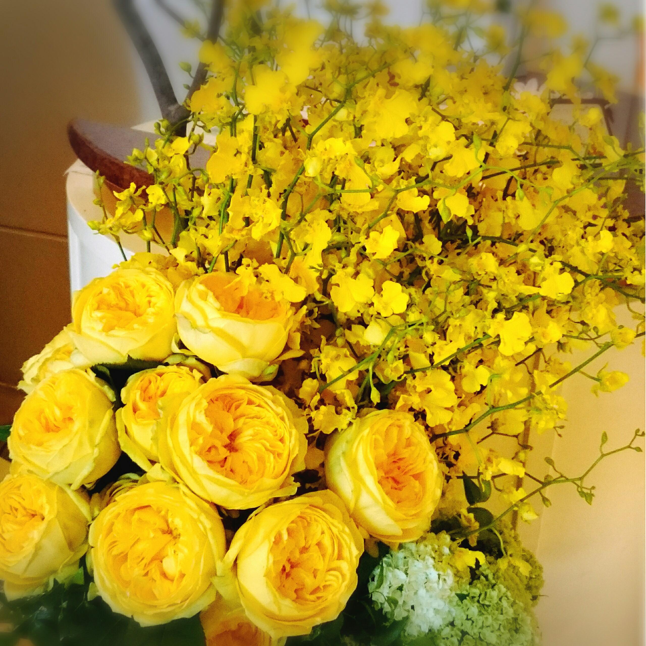 صوره صور ورود روعه , التقاط سحر الورود الطبيعية فى صور خاصة رائعة