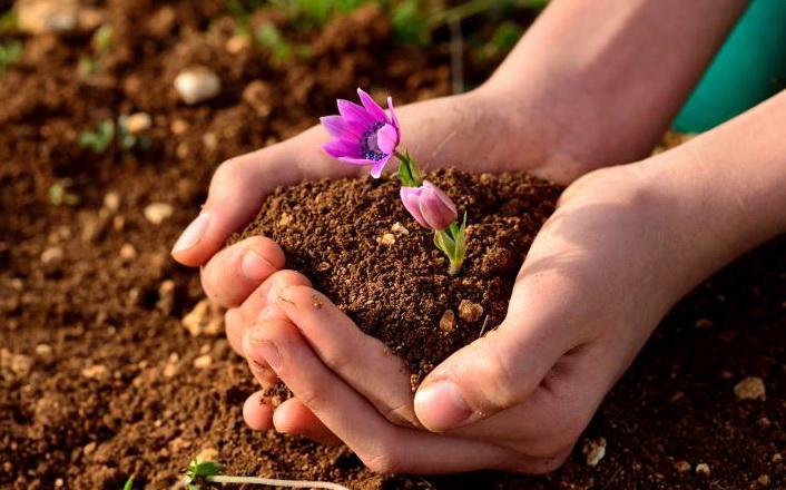 بالصور بحث عن التربة , التربه ومكوناتها الرائعة 6977 20