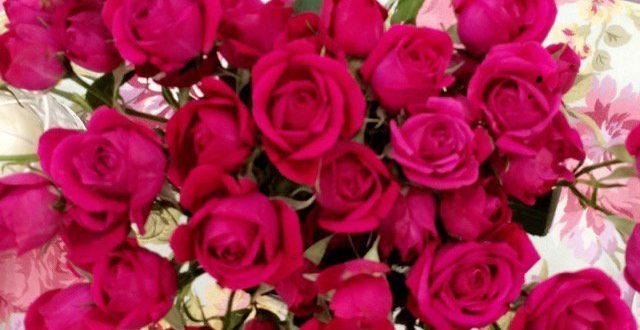 صور حكم عن الورد , اجمل ما قيل عن الورد