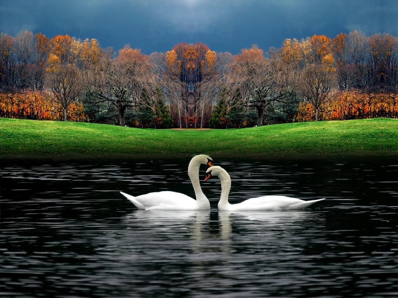 صورة صور مناظر جميله , منظر يريح النظر و يعطى امل جديد