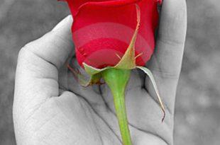 صورة شعر عن الورد , ان للورد لغه خاصه جدا