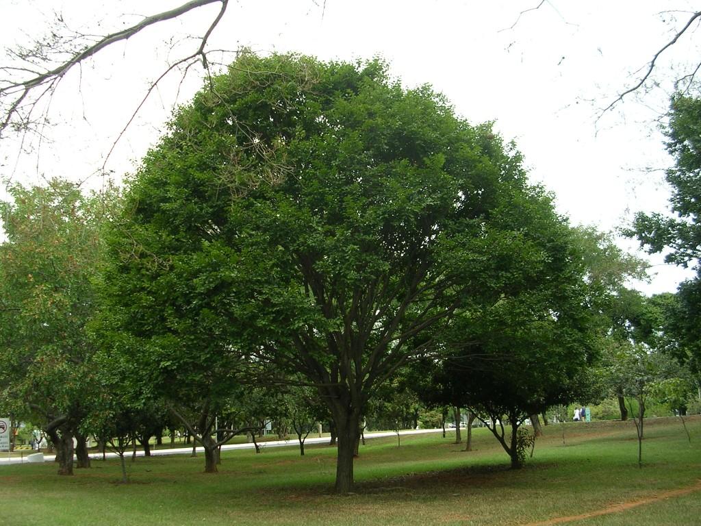 صورة صور اشجار , شجر جميل سبحان من ابدعه