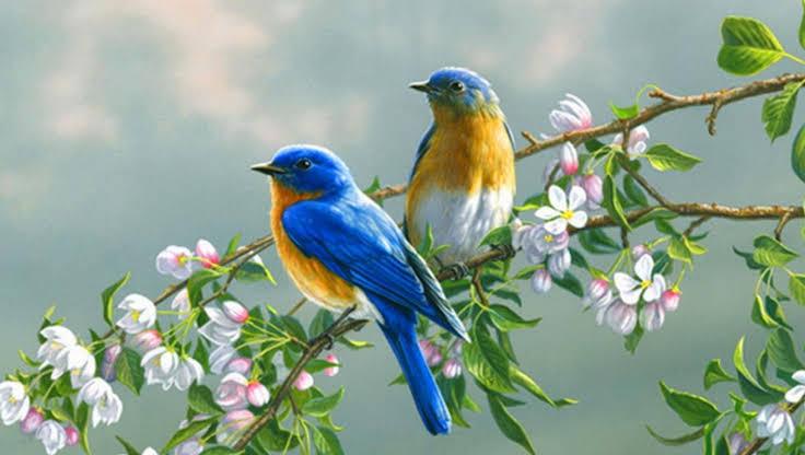 صورة صور طيور , طيور ملونة سبحان الخالق
