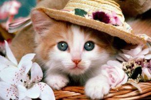صورة صور قطط متحركة , قطة جميلة لذيذة