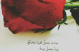 صورة عبارات عن الورد , الى كل عشاق الورد اليكم هذه الكلمات