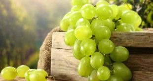 فوائد العنب , اهميه تناول العنب لجسم الانسان