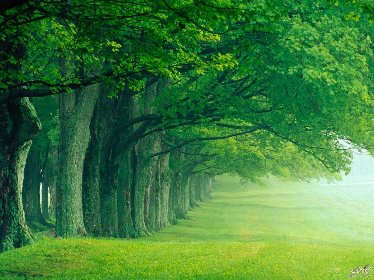 صورة صور الطبيعة الجميلة , سبحان الله معقول الصور دي عندنا في الطبيعة 3296 6