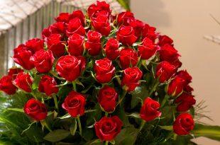 صورة اجمل صور الورد , يا صباح الفل والياسمين والبنفسج والجوري