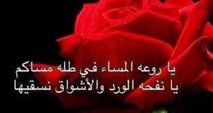صورة كلمات من ورود , بعض الورود على هيئة جمل وعبارات رائعة