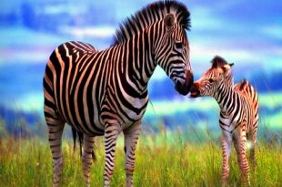 صورة صور حيوانات , احلى حيوانات كيوت قوي والله