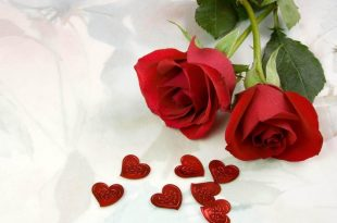 صورة اجمل ورود الحب , وردة تعبر عن الحب