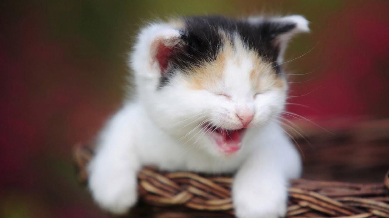 صورة صور قطط مضحكة , الى كل محبى القطط اليكم هذه اللقطات 1424 1