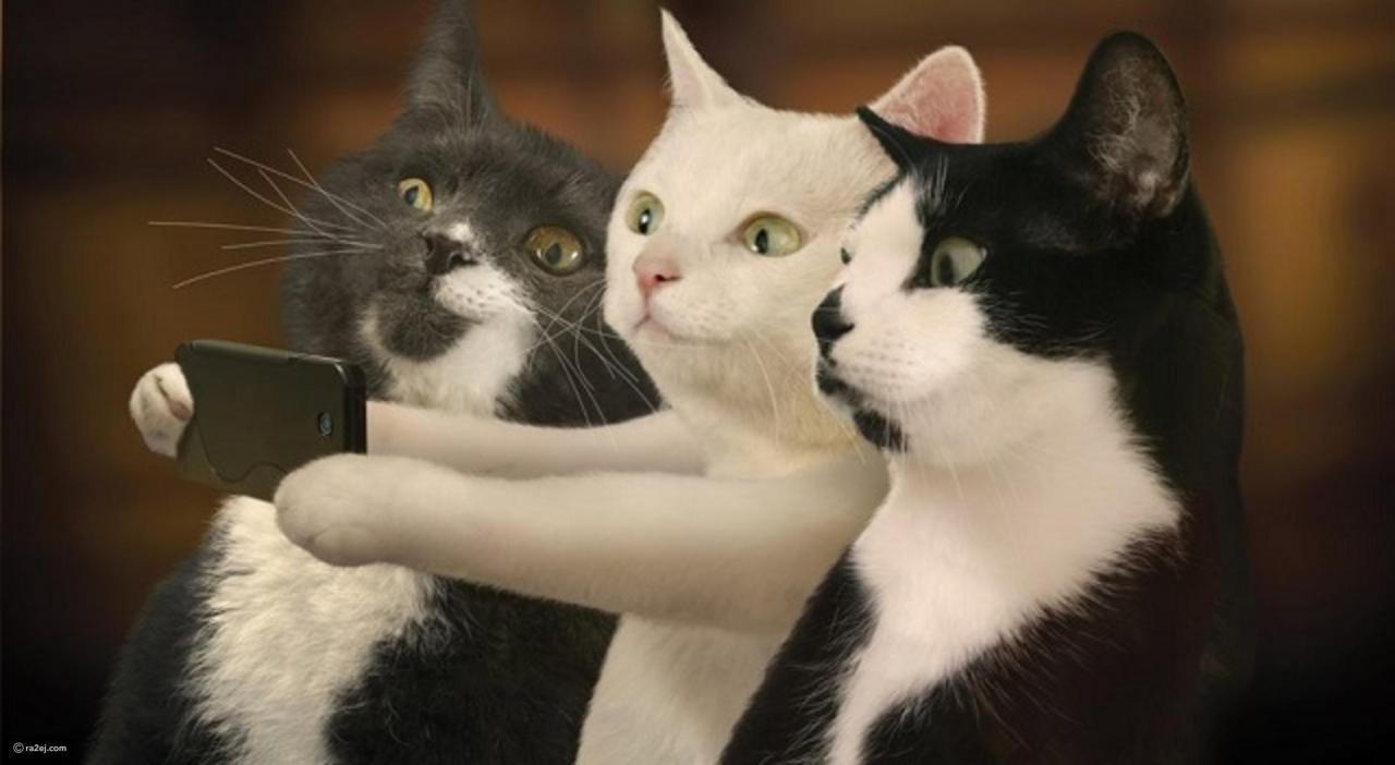 صورة صور قطط مضحكة , الى كل محبى القطط اليكم هذه اللقطات 1424 3