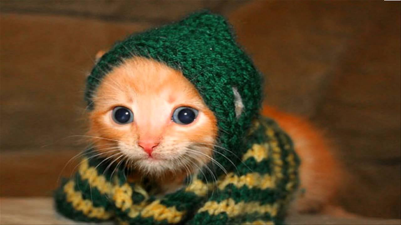 صورة صور قطط مضحكة , الى كل محبى القطط اليكم هذه اللقطات 1424 4