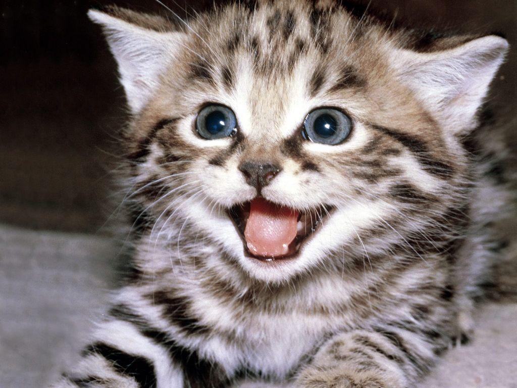 صورة صور قطط مضحكة , الى كل محبى القطط اليكم هذه اللقطات 1424 5