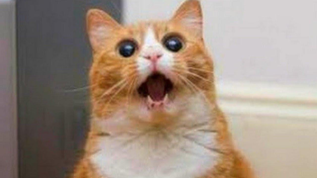 صورة صور قطط مضحكة , الى كل محبى القطط اليكم هذه اللقطات 1424 7