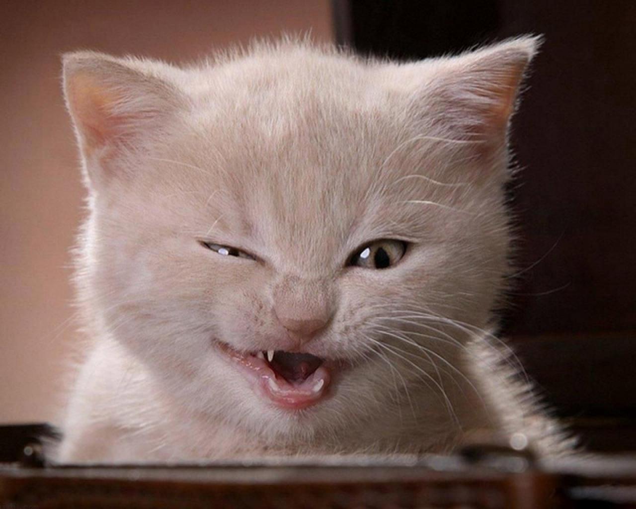 صورة صور قطط مضحكة , الى كل محبى القطط اليكم هذه اللقطات 1424 9