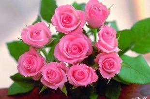 صورة زهور جميلة , للزهرة شكل مميز يخطف النظر