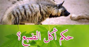 صورة هل يجوز اكل الضبع, اختلاف الائمة عن جواز اكل الضبع والله اعلم