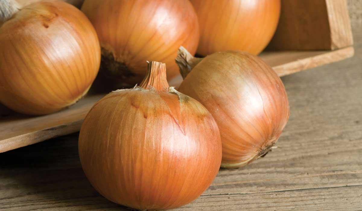 صورة فوائد البصل , ضرورة تناول البصل بشكل مستمر 1768