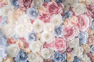 صورة خلفيات ورد , وردة شكلها مبهج و لونها رائع