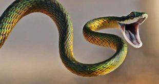 تفسير الثعبان في المنام لابن سيرين , تفسير حلم الثعبان
