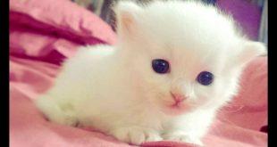 صورة بخاف من القطط بس بحب صورهم , قطط جميلة