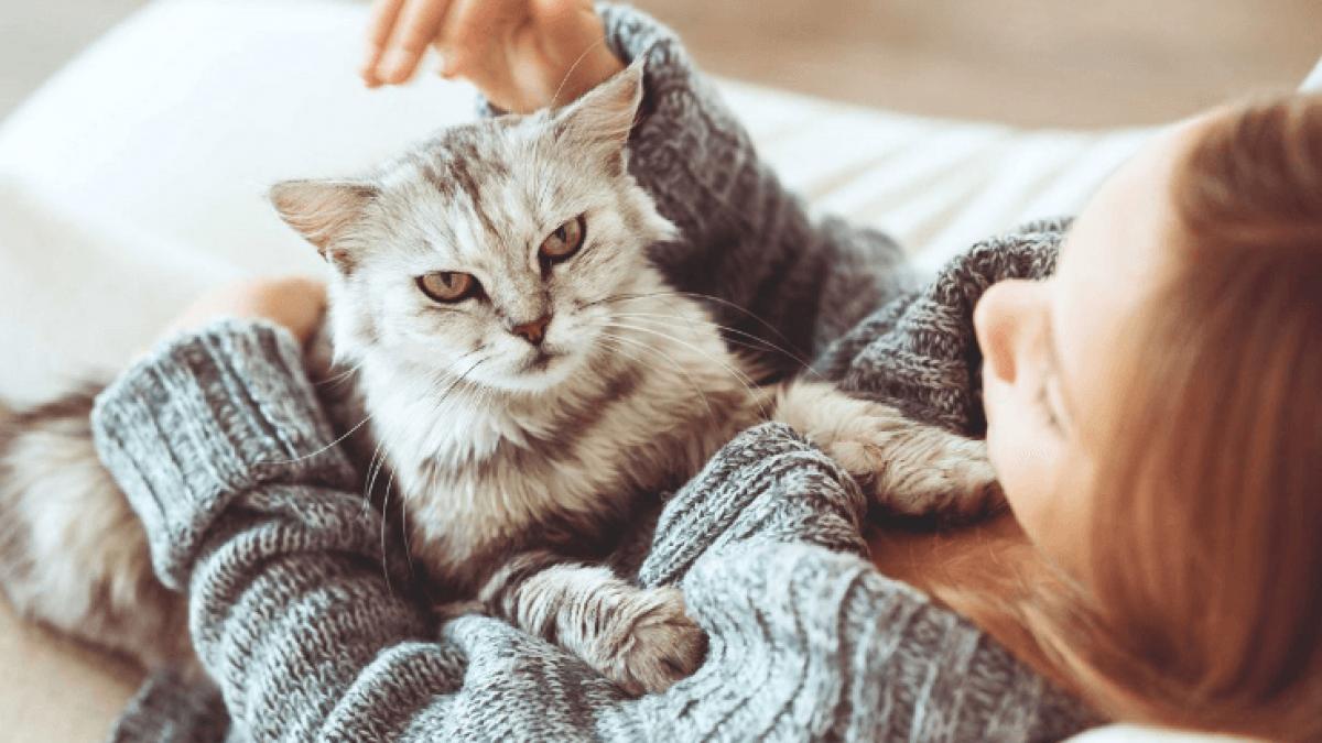 صورة لو هتربي قطة شوف النصائح دي كويس الاول , نصائح لتربية القطط 6164 1
