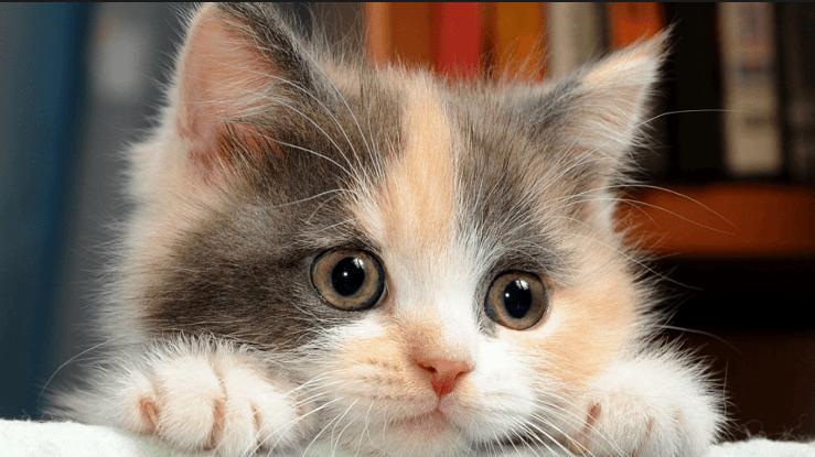 صورة لو هتربي قطة شوف النصائح دي كويس الاول , نصائح لتربية القطط 6164