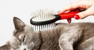 صورة شعر قطتي بيوقع أعمل ايه , تساقط شعر القطط