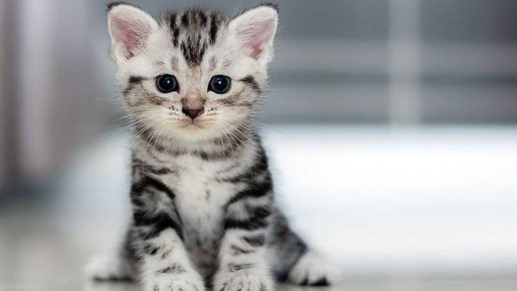 صورة حلمت ان فيه قطة عضتني جامد , تفسير حلم عضة القطة في اليد