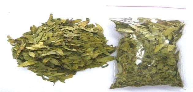 صورة فوائد اعشاب السنامكي للتخسيس , فوائد السنامكي للتنحيف 6323 2